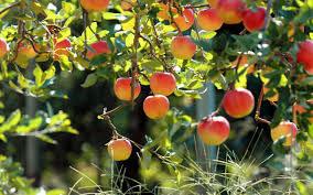 خبرگزاری ایسنا، دومین چالش نوآوری و فناوری نانو، افزایش زمان ماندگاری محصولات کشاورزی