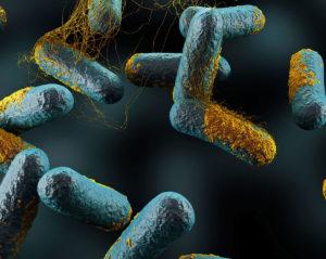 ساخت نانوحسگر زیستی تشخیص باکتری بوتولونیوم کلستردیوم بر پایه نوارهای کاغذی