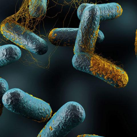ساخت نانوحسگر زیستی تشخیص باکتری کلستریدیوم بوتولینیوم بر پایه نوارهای کاغذی